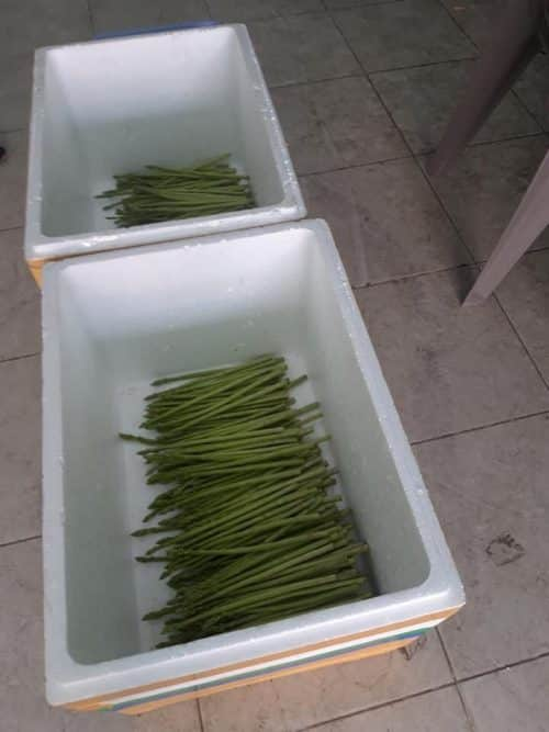 Asparagus is neatly arranged horizontally in a foam container